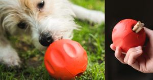 """Originally Built for Shelter Dogs, This """"Odd Ball"""" is Now Available Online"""