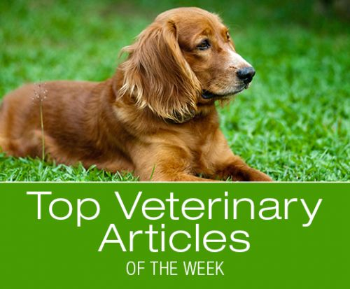 Top Veterinary Articles of the Week: Summer Safety, Heat Stroke, and more