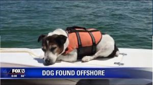 This Dog Fell Overboard And Was Rescued By Passing Boaters, 3 Hours Later