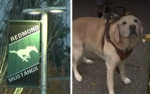 School District Suspends Mom From Acting As Son's Service Dog Handler