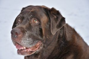 5 Things People Should Give Their Senior Dogs To Make Them Happier And Healthier