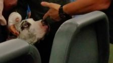 Passenger Punched Pregnant Woman And Service Dog On Plane: Police