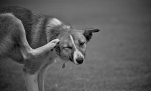 What Natural Ingredients Can I Give A Dog With Itchy Skin?