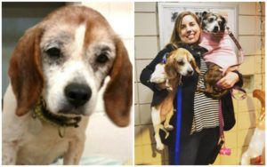 UPDATE: Sweet Senior Dog Finds A Loving Home To Spend His Last Holiday Season