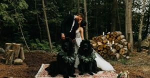 I Do! Two Newfoundlands Serve as Wedding Party for NHL All Star Goalie