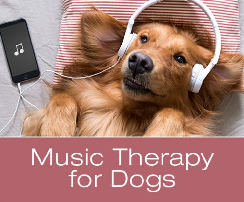 The Role Music Can Play In Your Dog's Health, Wellness and Happiness