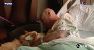 Two Dogs Lost During Tornado Reunite With Their Human At The Hospital