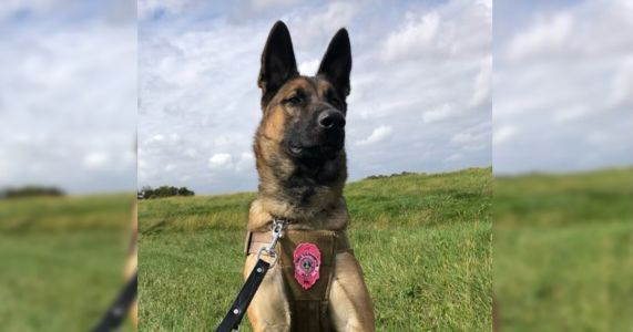 Overlooked Shelter Dog Becomes Police Department's First K9 In Decades