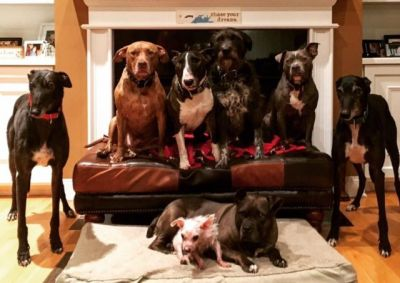 Couple Orders A 14- Ft Custom Bed To Accommodate Their 8 Dogs
