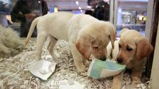 UK Bans Pet Stores From Selling Puppies And Kittens