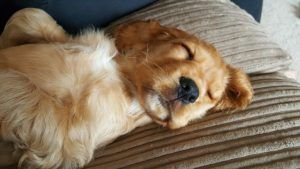 15 Dog Breeds That Love To Sleep