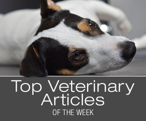 Top Veterinary Articles of the Week: Head Pressing, Marijuana Poisoning, and more