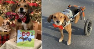 Beagle Becomes Inspirational Author After Heartbreaking Abuse