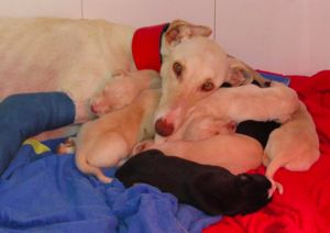 Stray Mother Dog With Broken Leg Leads Vet To Her Puppies