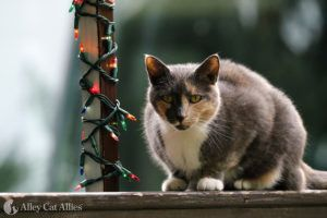 Must-Have Holiday Gift Guide for Cats