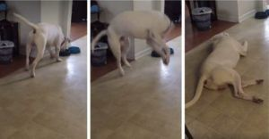 Dog Throws Epic Tantrum When His Dinner Is Missing A Key Ingredient