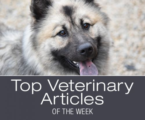 Top Veterinary Articles of the Week: Proper Administration of Thyroid Medication, Coxal Luxation, and more