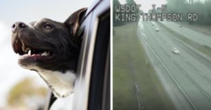 Man Teaches His Dog To Drive During High-Speed Chase