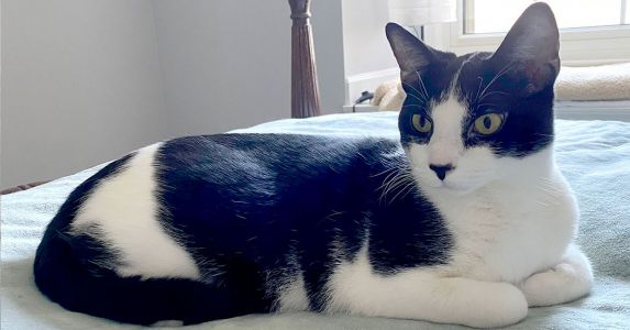 Speak Out for Louie and ALL Cats: Fight Animal Cruelty