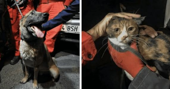 Rescue Dog Saves Trembling Cat From Earthquake Destruction