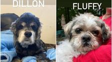 Pet Rescue Group Advertises 'Pre-Owned Senior Dogs' In Hilarious Post