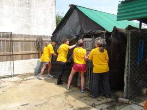 Your iHeartDogs Purchases Helped Rebuild A Shelter In A Day!