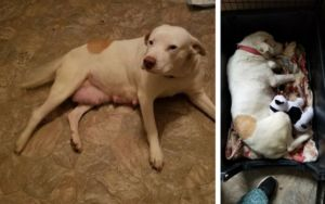 Mourning The Loss Of Her Puppies, Rescue Dog Finds Comfort With Stuffed Toys