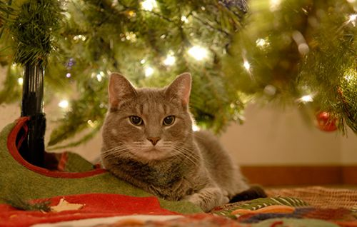 How to Save Your Holiday Trees and Decorations from Pets