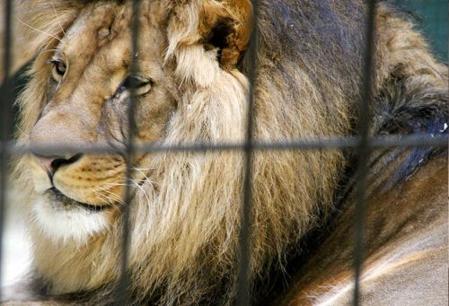 USDA Must Defend Reissuance of License to Law-Violating Roadside Zoo, Court Says