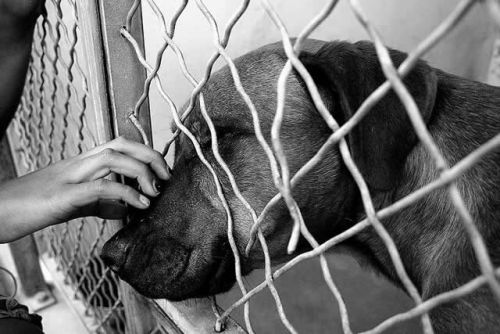 How You Can Support Your Local Animal Shelter