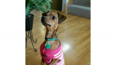 We adopted Hazel in September 2015, and she has been a member of