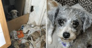 You Helped Rescue 12 Dogs From A Hoarding Situation