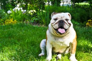 7 Dog Breeds That Are At Risk in The Summer Sun