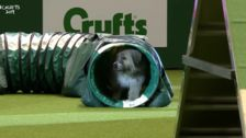 Happy-Go-Lucky Rescue Dog Has The Best Time Failing An Agility Course