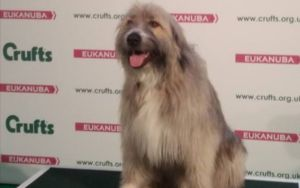 Rescue Dog Hilariously Invents His Own Agility Routine At Crufts Dog Show