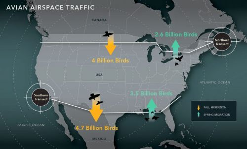 4 Billion Birds Will Fly Through American Airspace This Fall