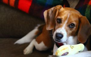 What's So Special About Your Dog's Favorite Toy?