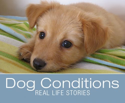 Fecal Transplant Saves A Puppy Dying from Parvo: Felix's Story