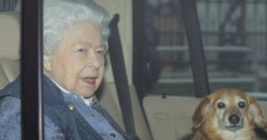 "Queen Elizabeth Says Heartbreaking Goodbye To One Of Her Two ""Dorgis"""