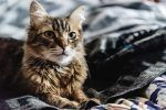 Upcoming Cat Events and Festivals for Summer 2018