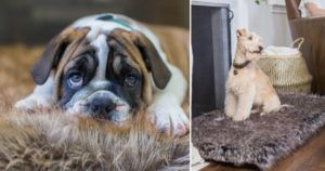 """This Company Just Created The """"Second Best Dog Bed In The World"""""""