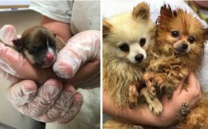 83 Dogs Rescued From Deplorable Conditions In Residential Puppy Mill