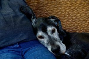 How To Prepare Your Home For A Senior Dog