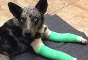 Badly Injured Dog Finds Help and New Home After Being Dumped In State Park