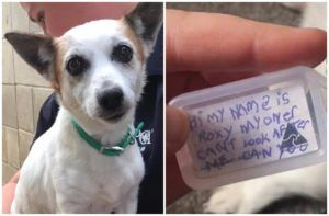 Lost Dog Found Wandering With Heartbreaking Note On Collar