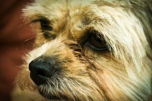 The 5 Things You Need To Know About Seizures In Dogs