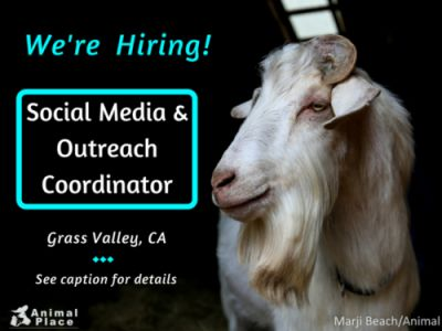 Passionate about advocating for animal liberation? We're looking