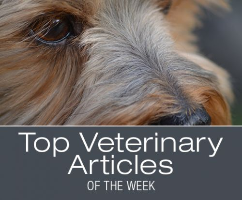 Top Veterinary Articles of the Week: Coccidia, Pulmonary Fibrosis, and more