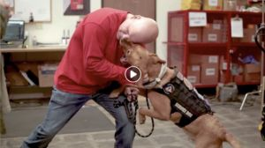 How Howie The Dog Helped This Couple Get Back To A Normal Way Of Life