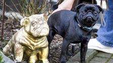 German Officials Seize Family's Pet Pug, Sell Her On eBay